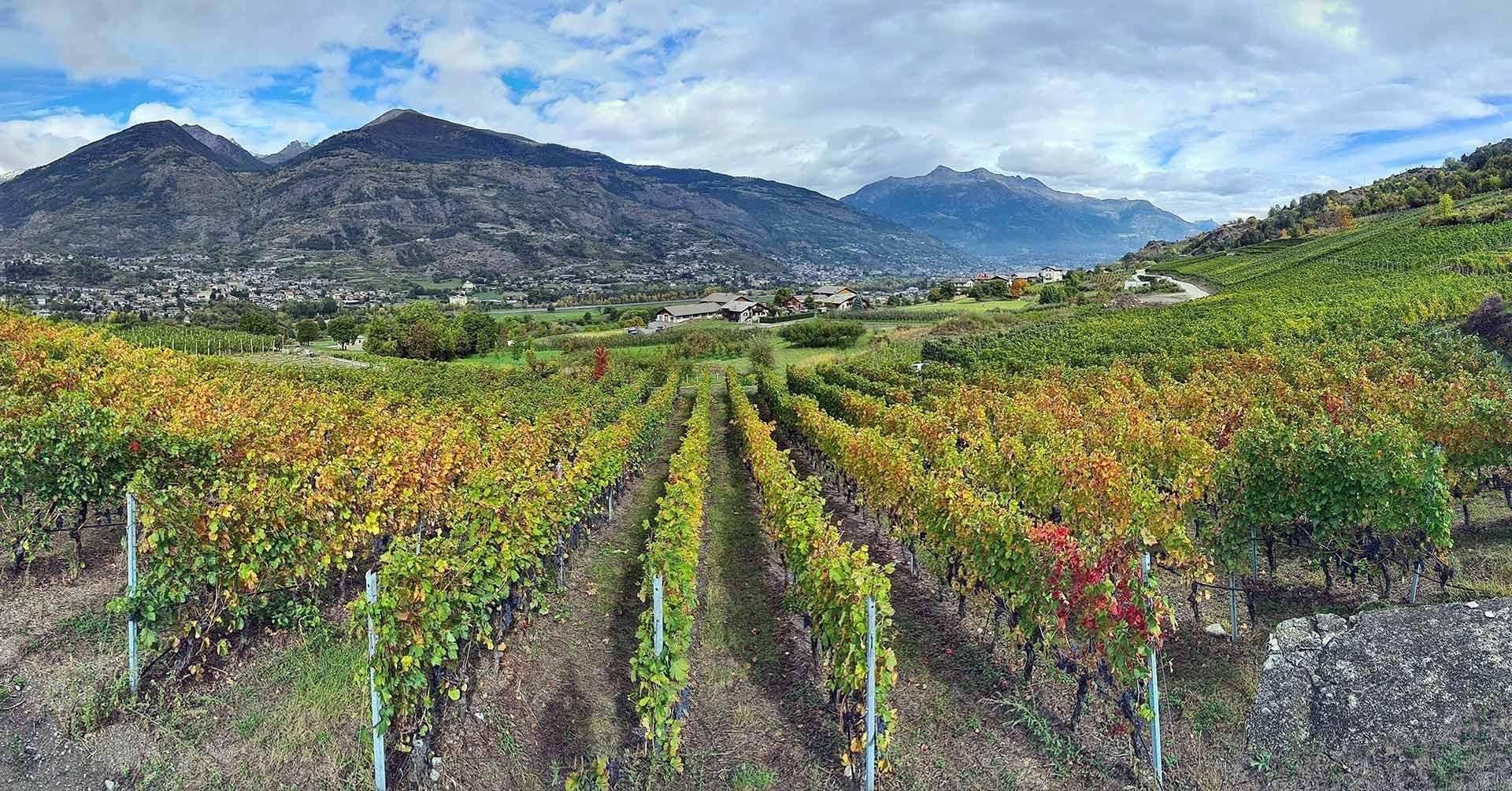 vigna valle d'aosta